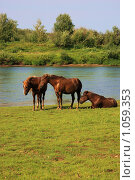 Лошади в верховье Печоры, фото № 1059353, снято 20 августа 2009 г. (c) Анатолий Ефимов / Фотобанк Лори