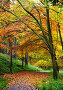Осень в лесу, фото № 5100621, снято 12 ноября 2012 г. (c) Татьяна Кахилл / Фотобанк Лори