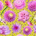 Бесшовный фон с цветами и бабочками, иллюстрация № 5823297 (c) Наталья Спиридонова / Фотобанк Лори