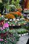 Street flower shop with colourful flowers, фото № 6337589, снято 12 октября 2013 г. (c) Elnur / Фотобанк Лори