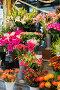 Street flower shop with colourful flowers, фото № 6397565, снято 12 октября 2013 г. (c) Elnur / Фотобанк Лори