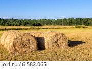 Рулоны сена на поле в летний солнечный день, фото № 6582065, снято 25 октября 2014 г. (c) FotograFF / Фотобанк Лори