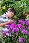 Мальчик-подросток разглядывает флоксы в саду, фото № 6596093, снято 23 июля 2014 г. (c) Володина Ольга / Фотобанк Лори