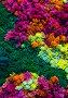 Nature colorful background, фото № 6700737, снято 24 ноября 2014 г. (c) Яков Филимонов / Фотобанк Лори