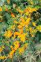 Ветки облепихи с спелыми ягодами, фото № 6907817, снято 6 сентября 2011 г. (c) Татьяна Белова / Фотобанк Лори