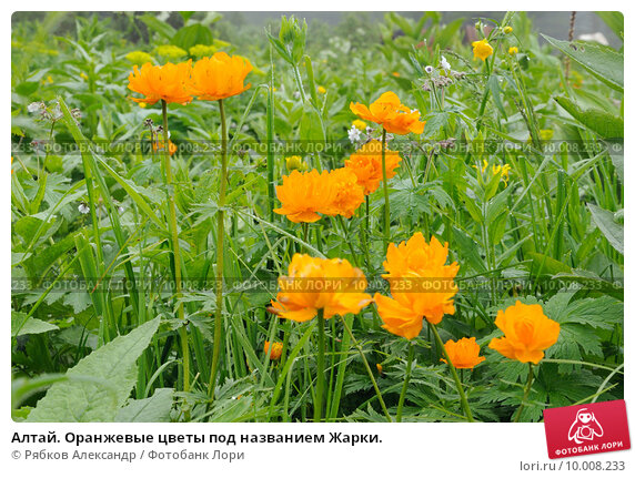 The gifts of altai