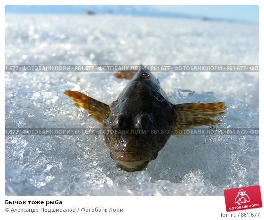 Бычок тоже рыба, фото 861677, снято 11 апреля 2009 г. (c) Александр