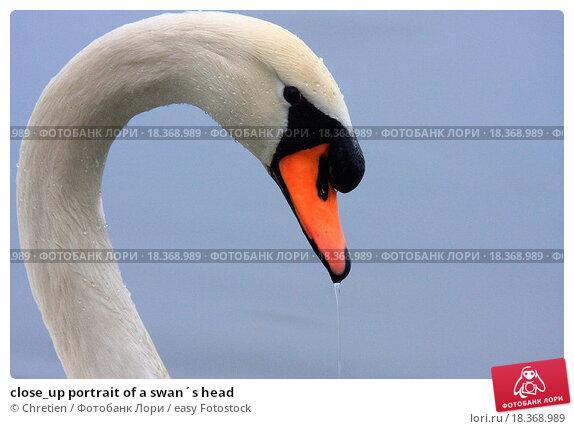 Голова лебедя из пенопласта своими руками