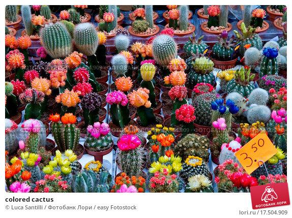 Как сделать цветные кактусы 321