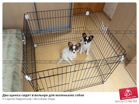 Вольер для маленьких собак в квартире своими руками