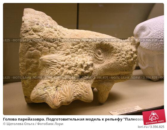 http://prv1.lori-images.net/golova-pareiazavra-podgotovitelnaya-model-k-relefu-0003356825-preview.jpg