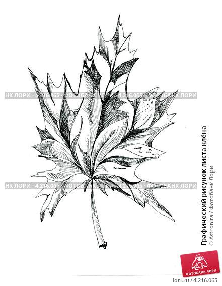 Рисунок контура листа клёна