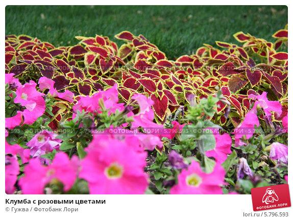 Клумба из розовых цветов