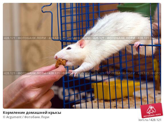 Домашняя крыса условия содержания