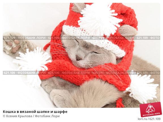 Как связать новогоднюю шапку для кота