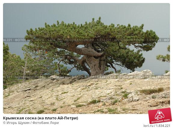 Гирлянда Triumph Tree