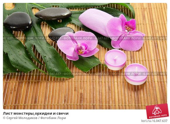 Игрушка Гипс Выкройка Бабочка галстуЛистья орхидея иЛистья