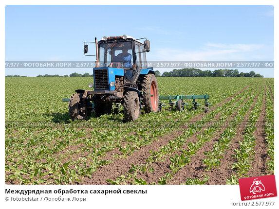 Технология выращивания сахарного буряка 86