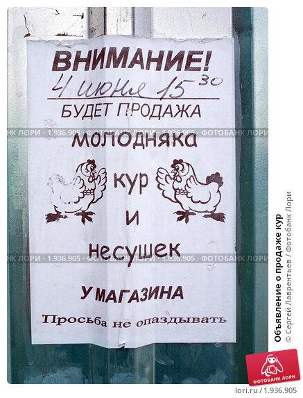 Объявление о продаже кур, фото 1936905, снято 30 июля 2010 г. (c) Сергей...