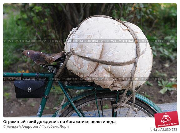 Огромный гриб дождевик на багажнике велосипеда, фото 2830753.
