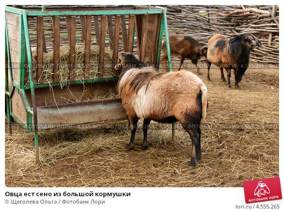 Кормушки для баранов фото - Кормушки для овец видео