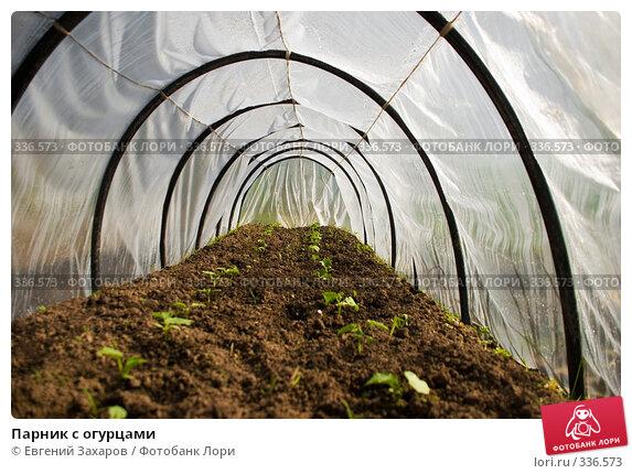 Берегу купить теплица для кактусов