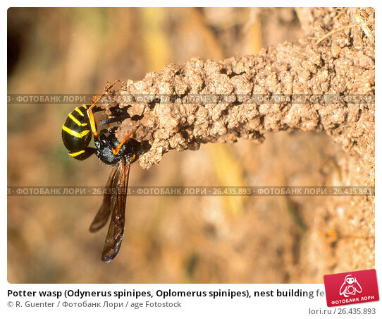 YOUR HOME Eliminating Wasps and Their Nests  The New