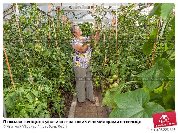 Выращивание и уход за помидорами