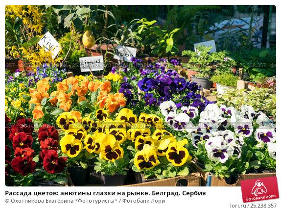 Цветы через рассаду