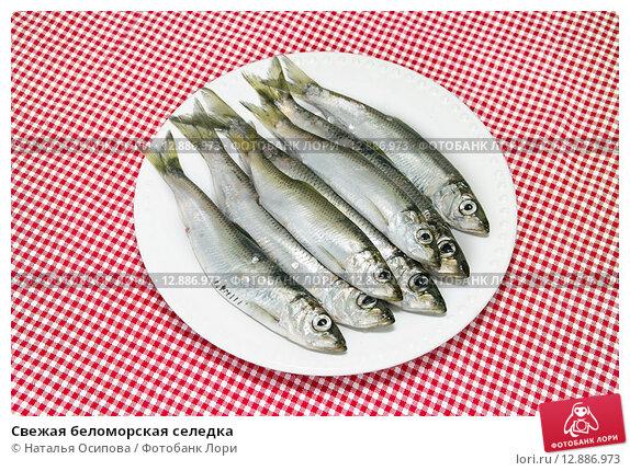 блюда свежей сельди фото