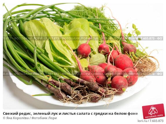 Салат из зеленого лука и редиски