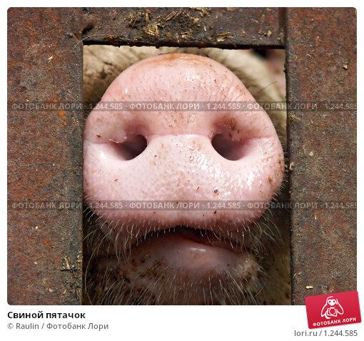 Нос свиньи своими руками