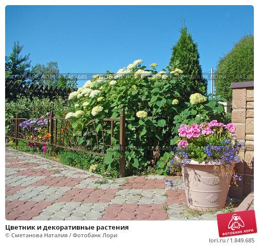 Роз на дачном посадка цветов на даче