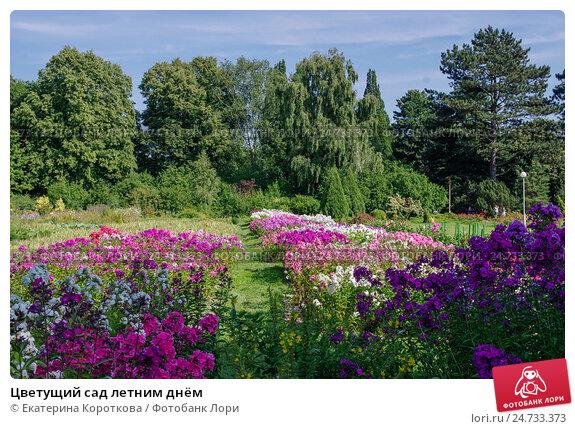 Цветы с летним цветением