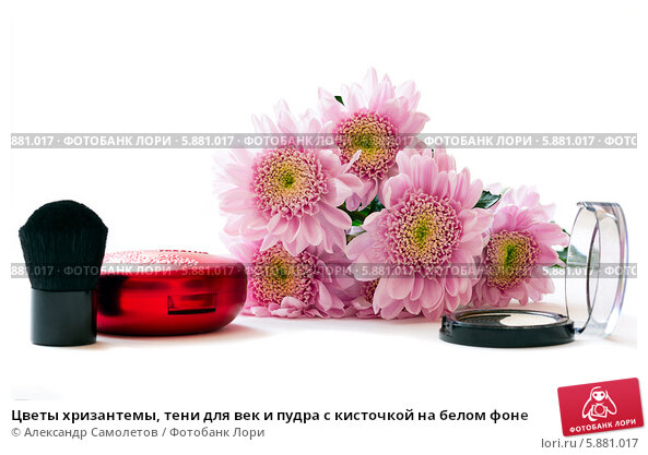 Цветы хризантемы, тени для век и пудра с кисточкой на белом фоне, фото № 5881017, снято 6 мая 2014 г. (c) Александр Самолетов / Фотобанк Лори