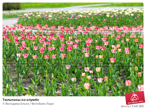 Клумбы под тюльпаны