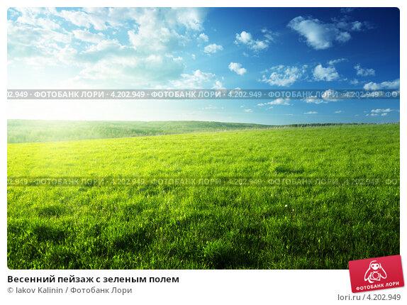 Весенний пейзаж с зеленым полем фото