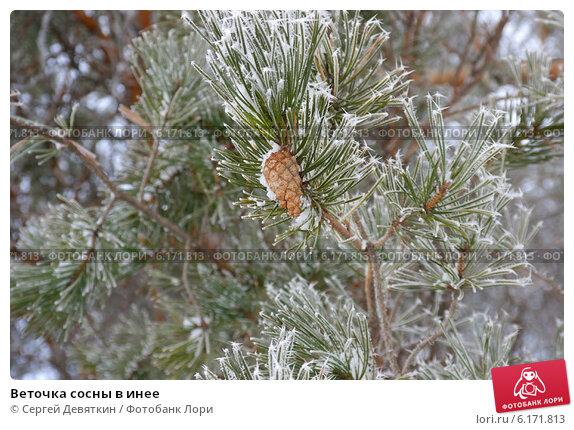 Как сделать иней на ветках елки