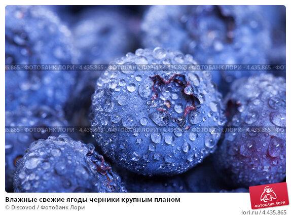 Влажные свежие ягоды черники крупным планом, фото 4435865, снято 23