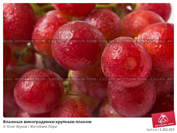 Влажные виноградинки крупным планом, фото 3302453, снято 28 января
