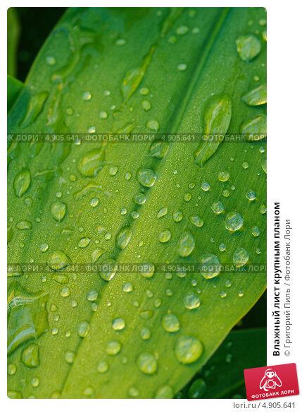 Влажный лист крупным планом, фото 4905641, снято 25 июля 2013 г. (c