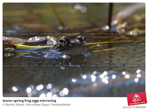Frog eggs in swimming pool