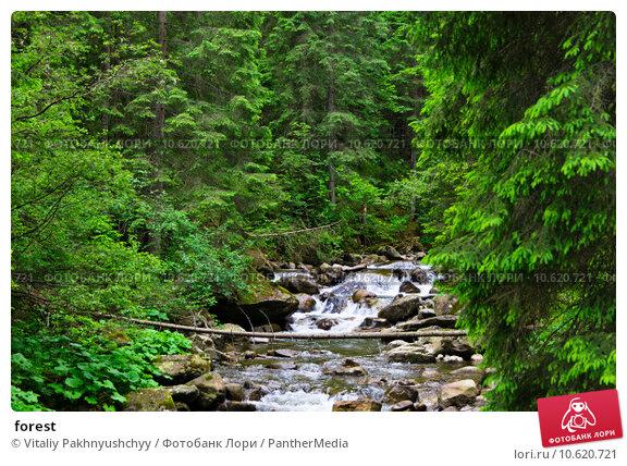 forest. Стоковое фото, фотограф Vitaliy Pakhnyushchyy / PantherMedia / Фотобанк Лори