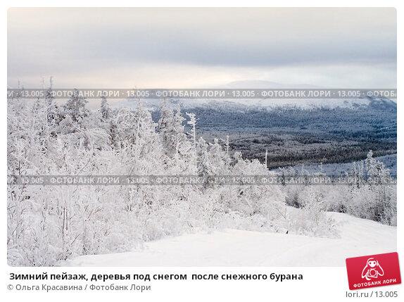 Зимний пейзаж, деревья под снегом  после снежного бурана, фото № 13005, снято 3 ноября 2006 г. (c) Ольга Красавина / Фотобанк Лори