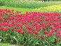 Цветы на газоне, эксклюзивное фото № 233, снято 10 мая 2004 г. (c) Ирина Терентьева / Фотобанк Лори