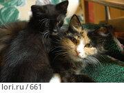 Купить «Кошка с котенком», фото № 661, снято 28 июня 2005 г. (c) Юлия Яковлева / Фотобанк Лори