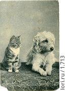 Купить «Кошка и собака», фото № 1713, снято 17 сентября 2019 г. (c) Retro / Фотобанк Лори