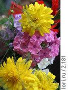 Купить «Флоксы и желтые цветы», эксклюзивное фото № 2181, снято 19 августа 2005 г. (c) Ирина Терентьева / Фотобанк Лори