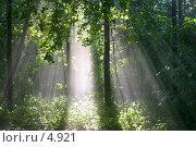 Купить «Солнце в парке», фото № 4921, снято 12 июля 2020 г. (c) Юлия Кузнецова / Фотобанк Лори