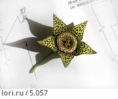 Купить «Цветок Стапелии на белых листах с конструкторскими чертежами», фото № 5057, снято 2 августа 2005 г. (c) Ольга Красавина / Фотобанк Лори